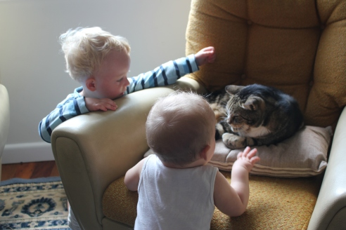 Two babies = cat-astrophe